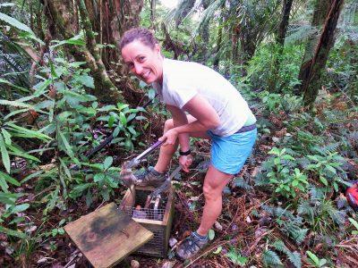 Trapping on Mt Tamahunga