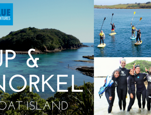 SUP & Snorkel Events @ Goat Island
