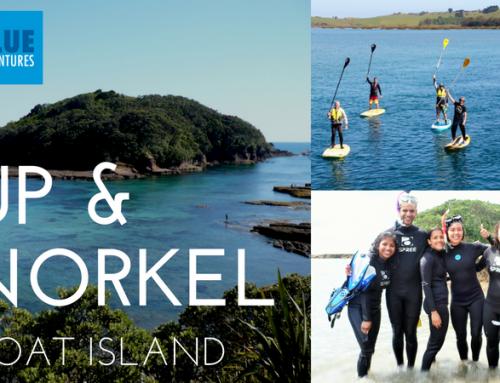 SUP & Snorkel Events @ Goat Island
