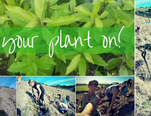 Get Your Plant On at Saltwater Eco's Winter Planting Event