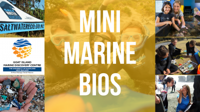 Mini Marine Bios Holiday Program