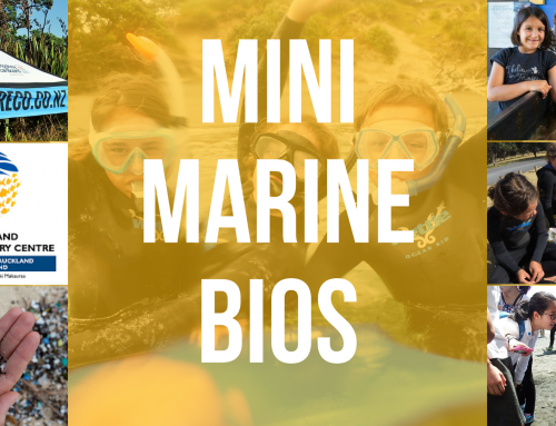 Mini Marine Biologist Holiday Programs