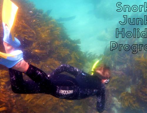 Snorkel Junky 3 Day School Holiday Programs